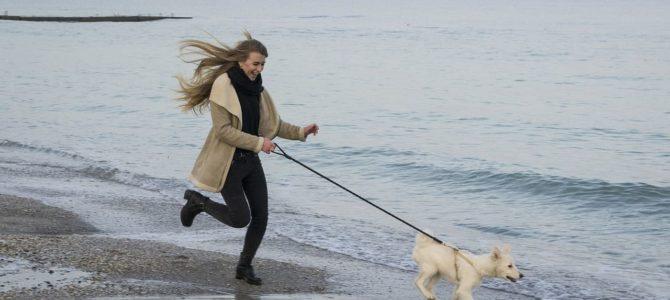 Jak biegać z psem ?